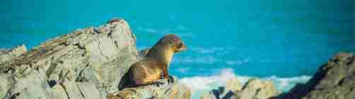 Seal Coast Safari sea on rock Red Rocks South Coast